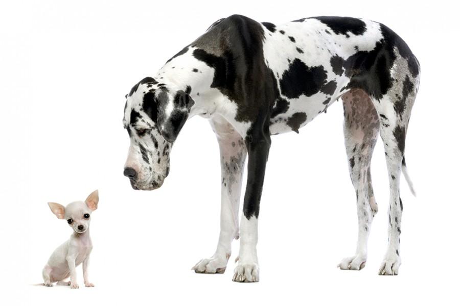 cani di forma diversa